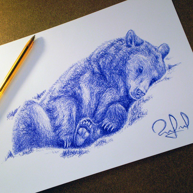 11 bear animal pen drawings by rafael augusto