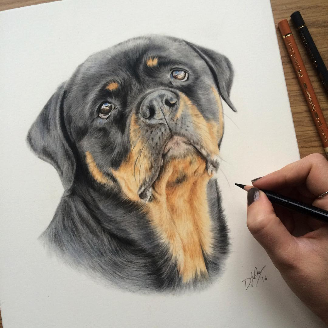 11 dog animal drawings by danielle fisher