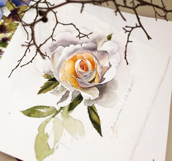 rose watercolor paintings by julia barminova