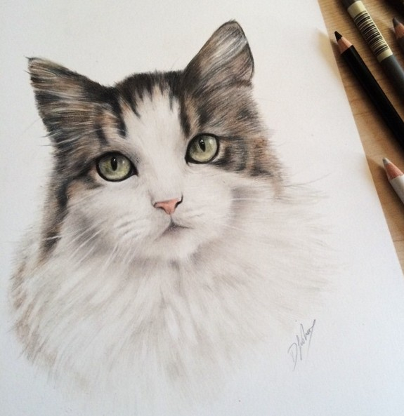 cat animal drawings by danielle fisher