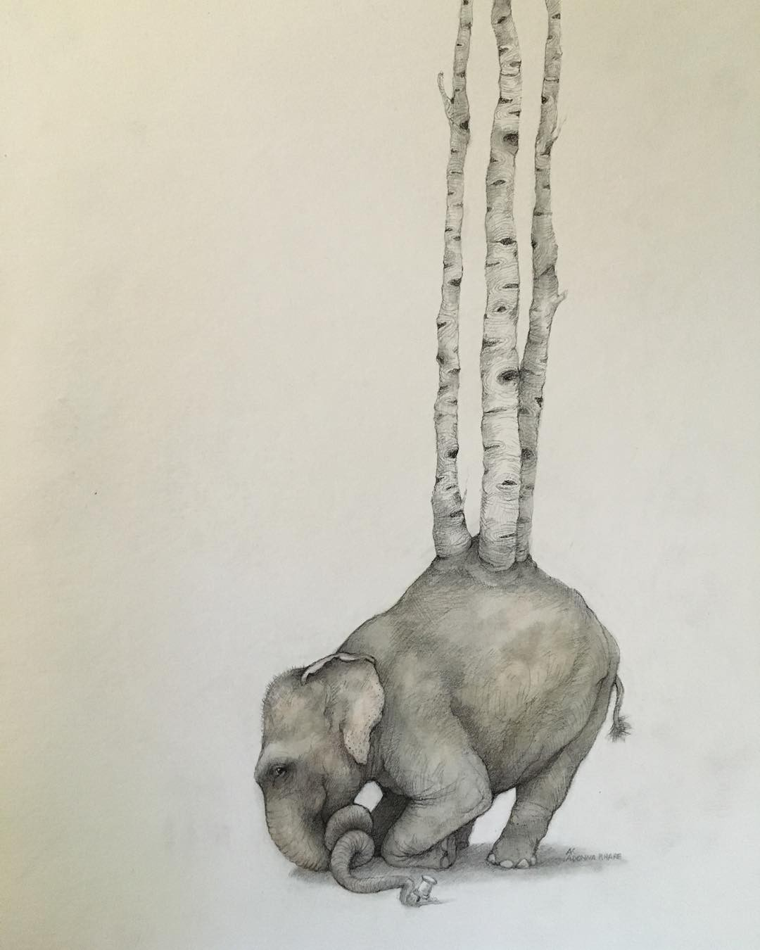 elephant tree pencil drawing by adonna khare