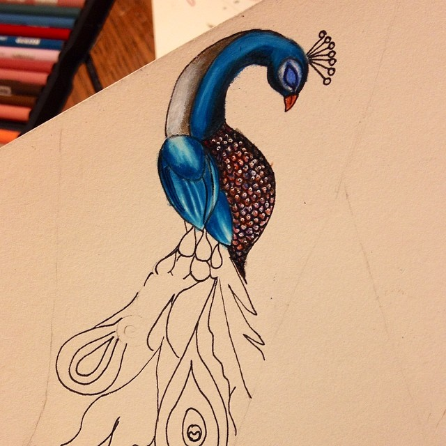 peacock color pencil drawings by stephanie frederick