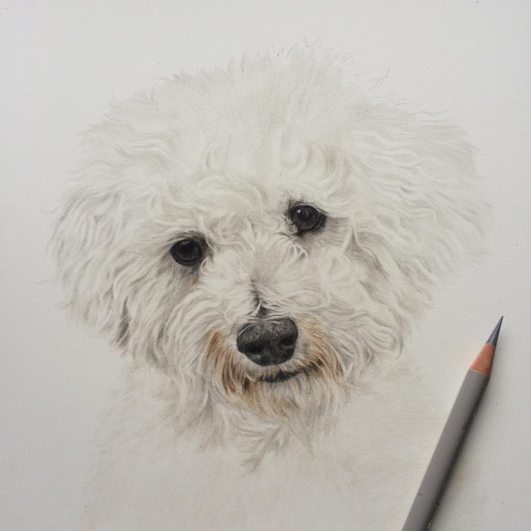 dog animal drawings by danielle fisher