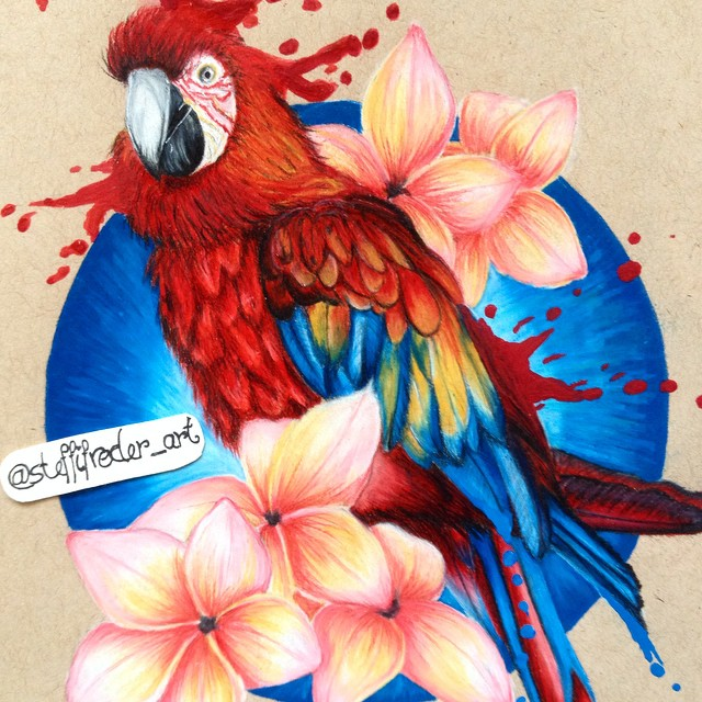 parrot color pencil drawings by stephanie frederick