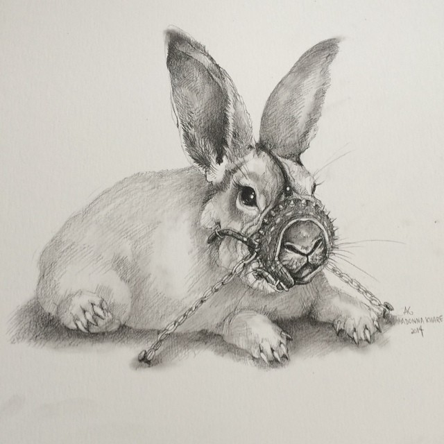 rabbit animal pencil drawing by adonna khare