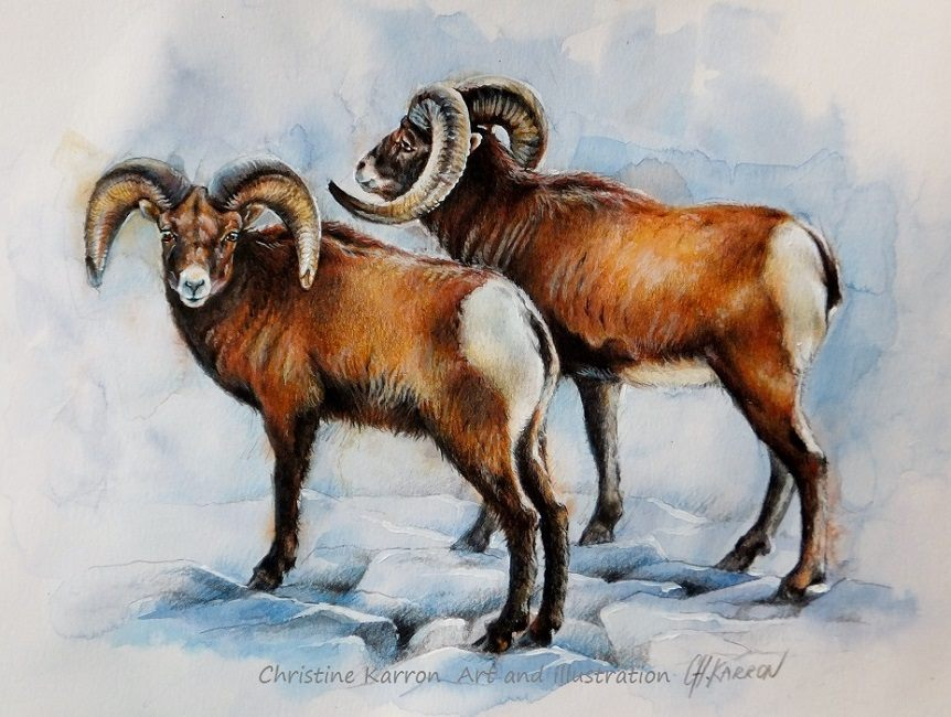 goat watercolor paintings by christine karron