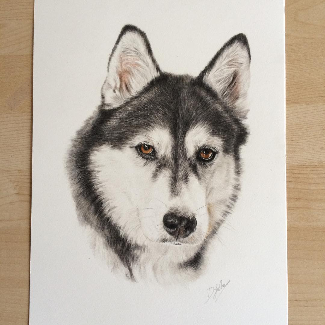 16 dog animal drawings by danielle fisher