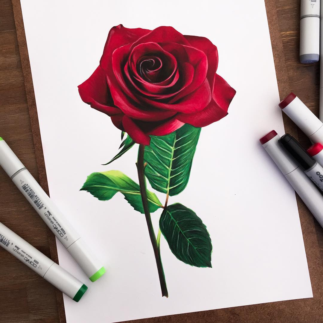 rose color marker drawings by stephen ward