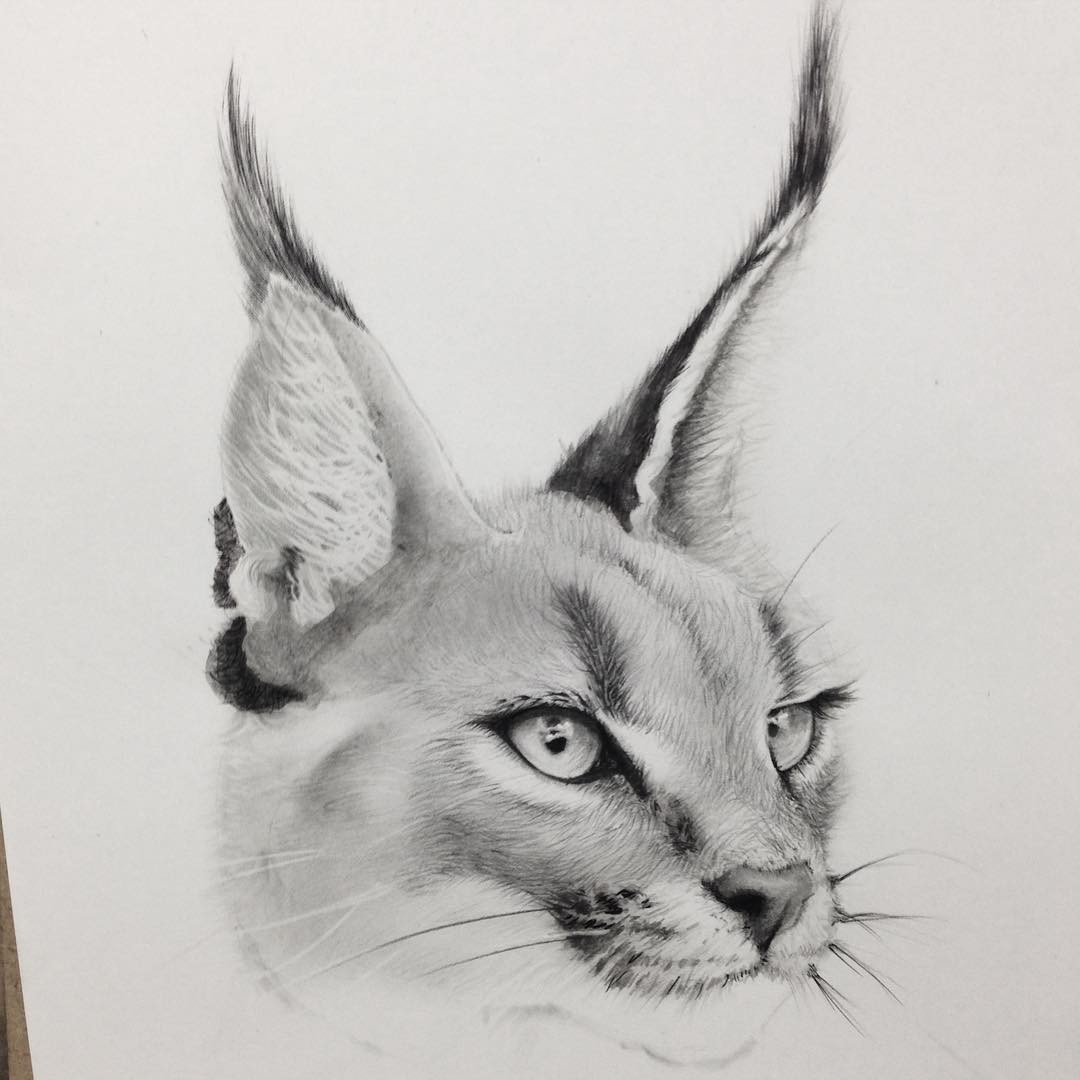 cat animal pencil drawing by siyoung