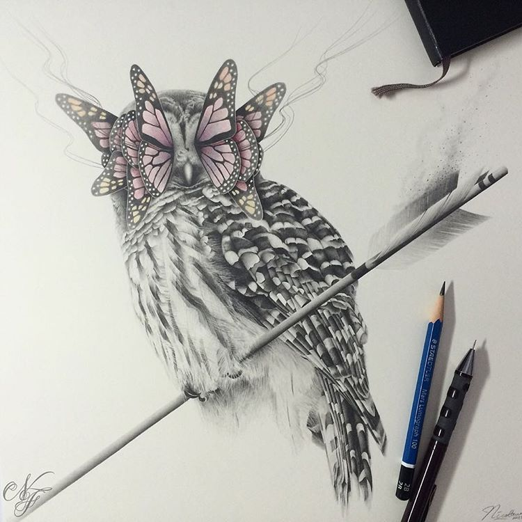 owl butterfly pencil drawings by nicolaus ferry