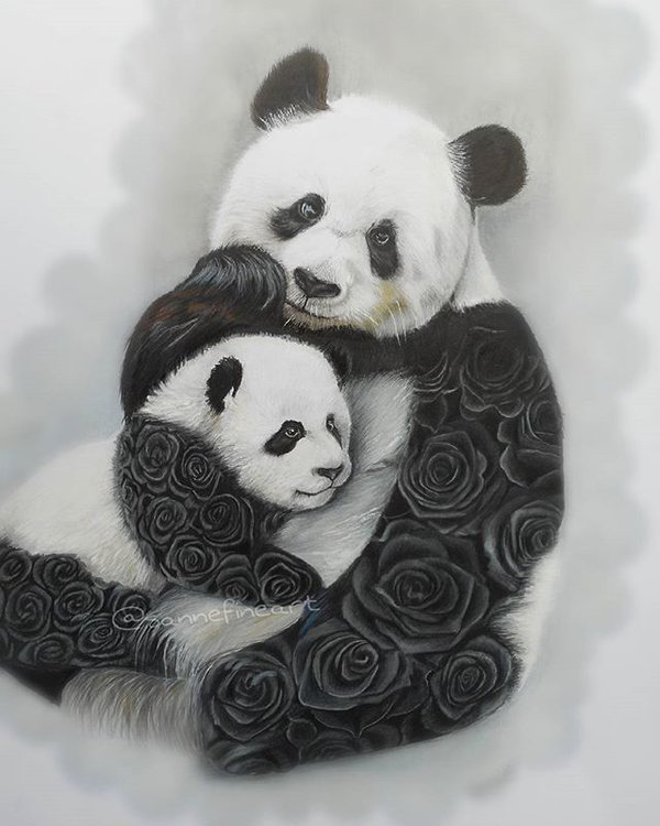 panda pencil drawings by sanne