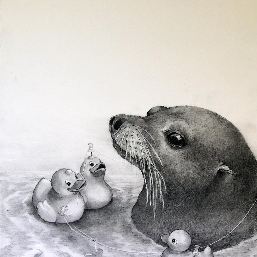 sealion animal pencil drawing by adonna khare
