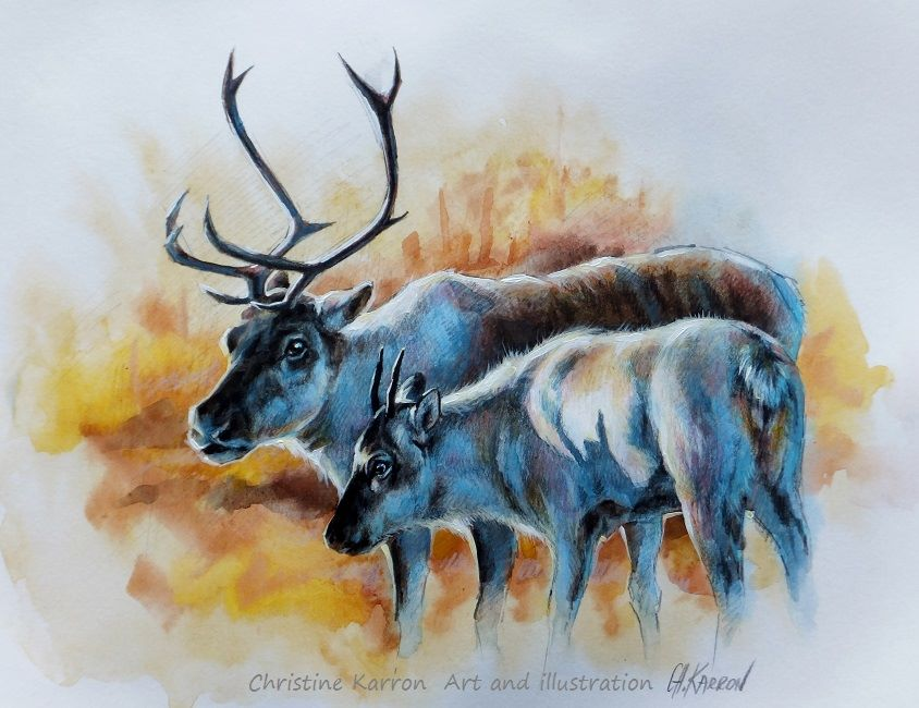2 deer watercolor paintings by christine karron