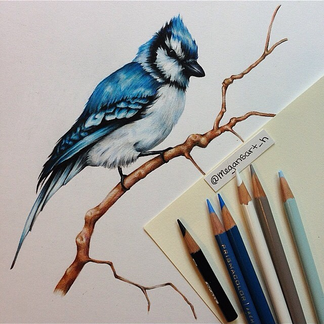 bird color pencil drawing by megan renee