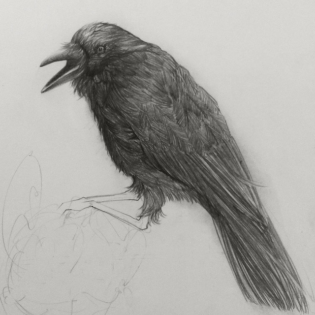 crow bird pencil drawing by siyoung
