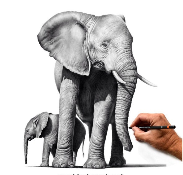 elephant animal paintings by richard symonds