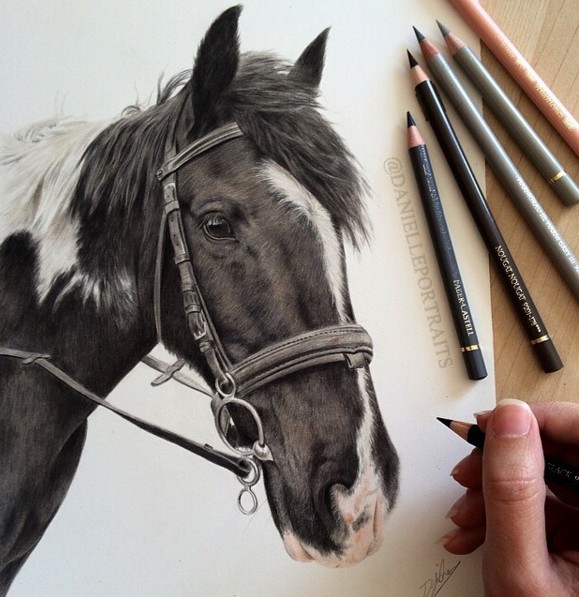 3 horse animal drawings by danielle fisher