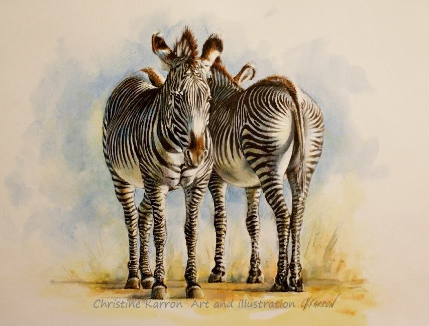 zebra watercolor paintings by christine karron