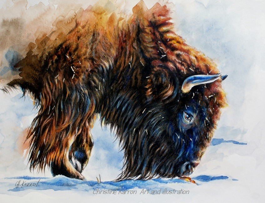 bison watercolor paintings by christine karron