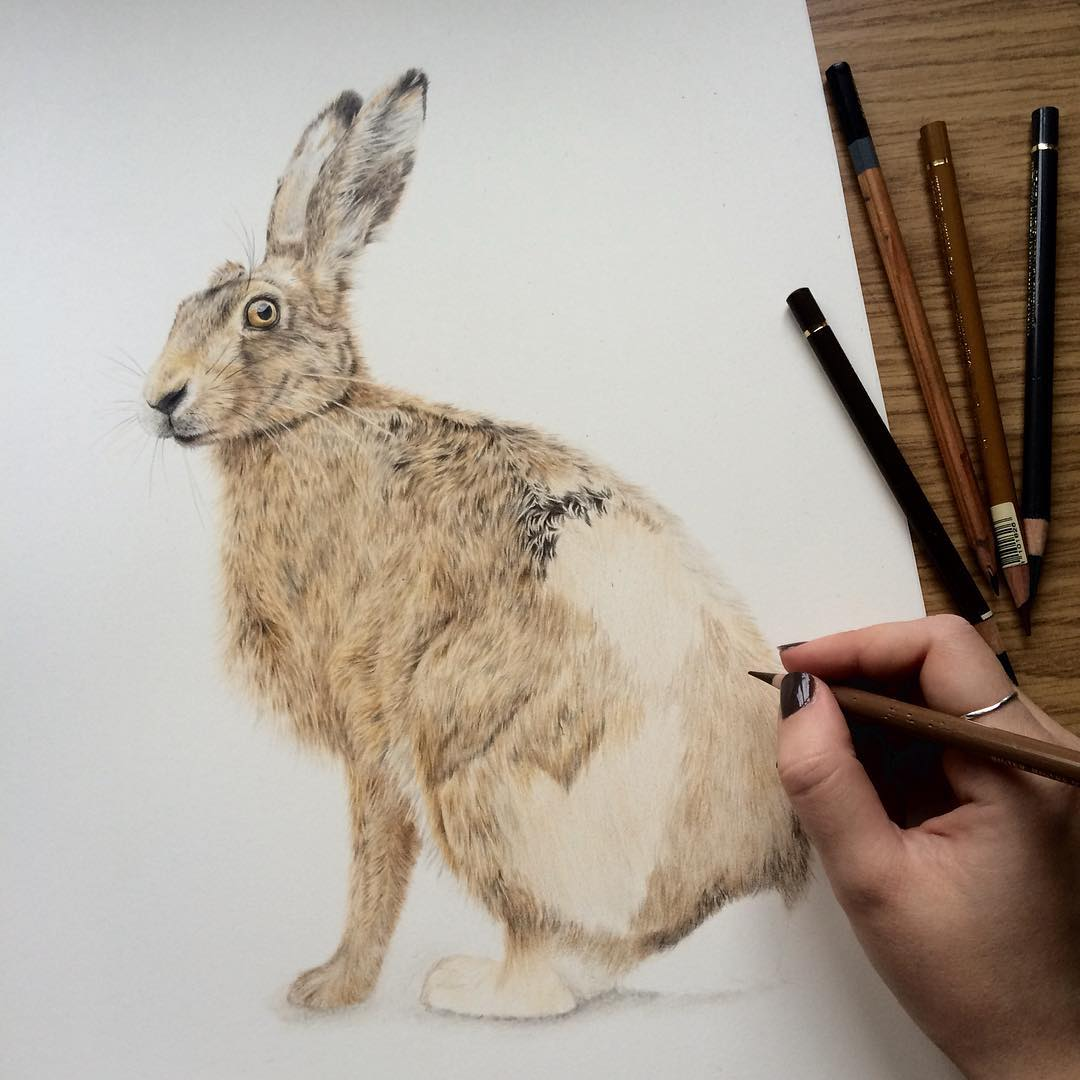 rabbit animal drawings by danielle fisher