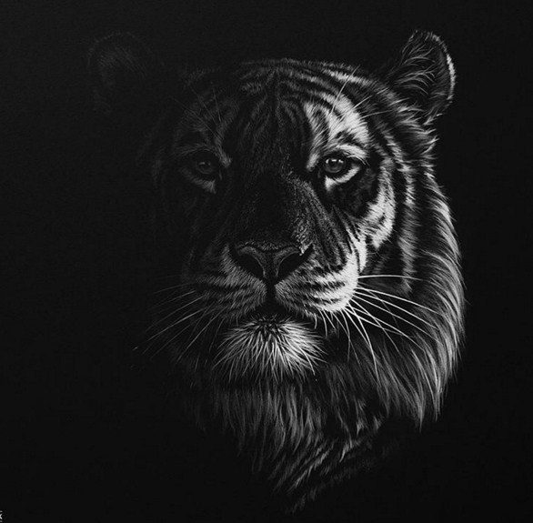 tiger animal paintings by richard symonds