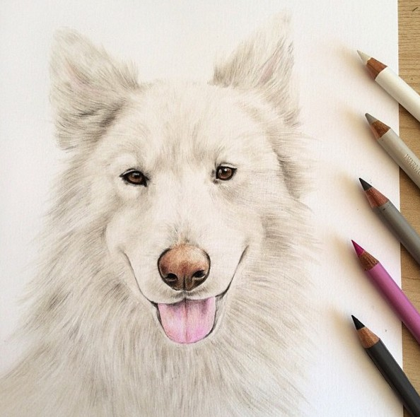 5 dog animal drawings by danielle fisher