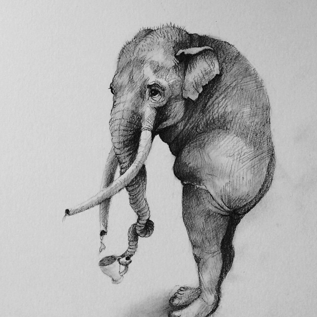 elephant animal pencil drawing by adonna khare