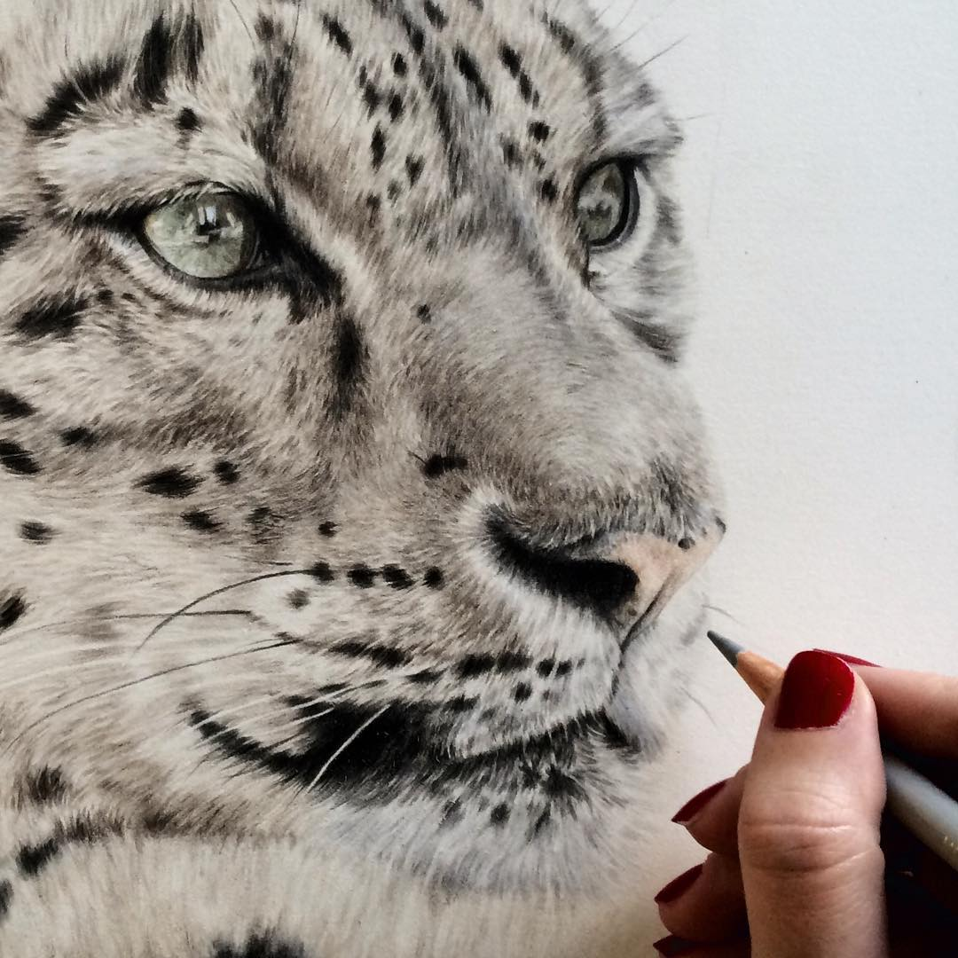 6 tiger animal drawings by danielle fisher