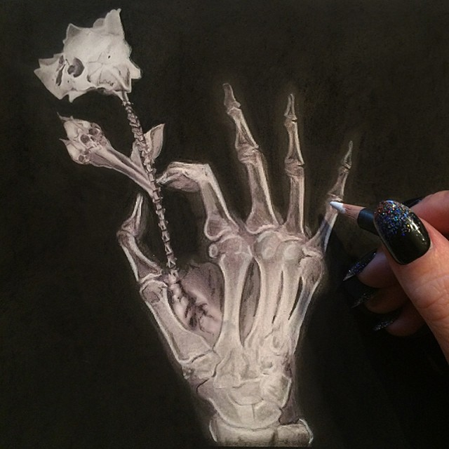 bones pencil drawing by stacy jean