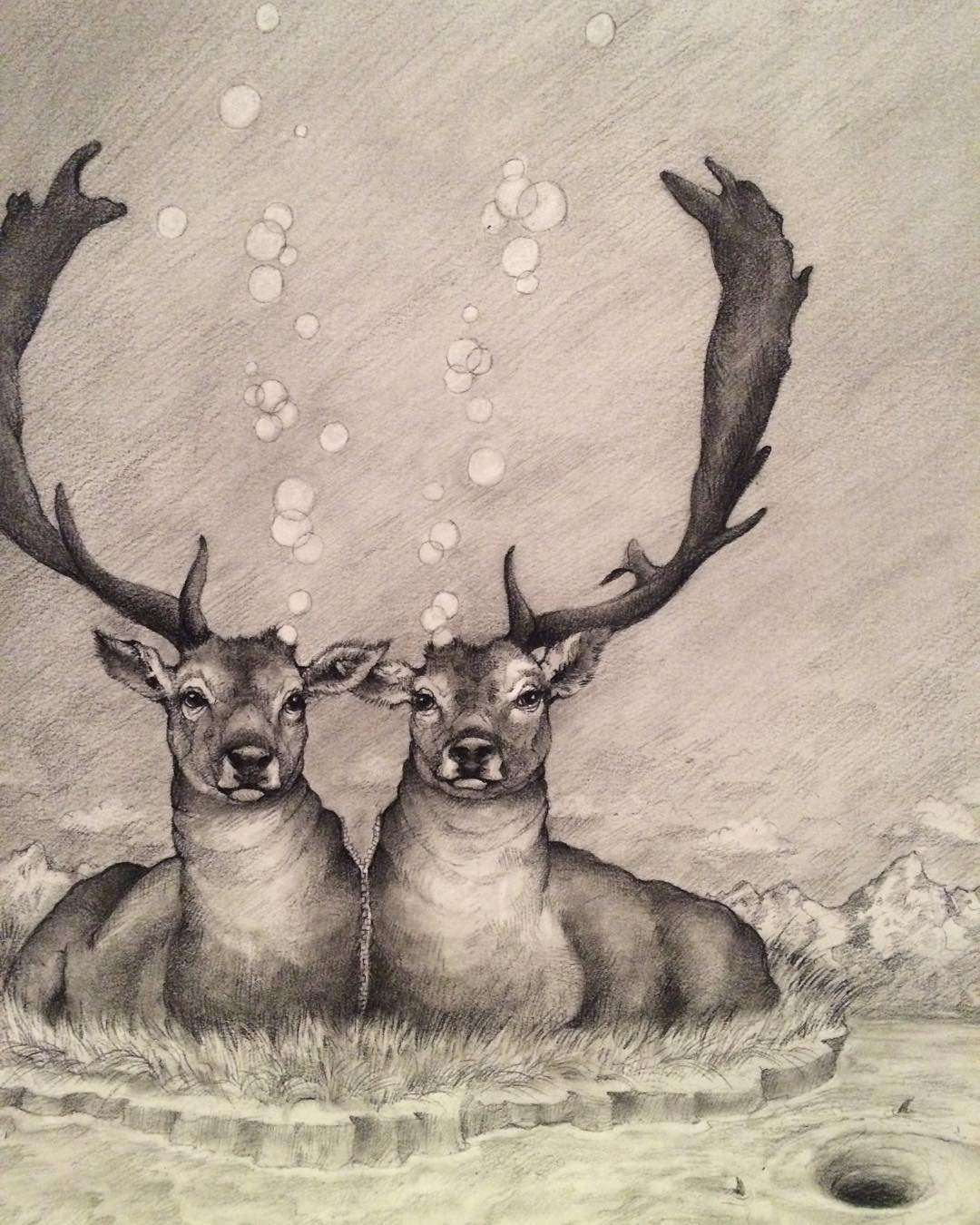 deer animal pencil drawing by adonna khare