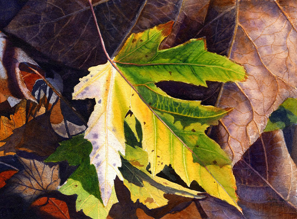 leaf watercolor maple leaf painting cathy hillegas