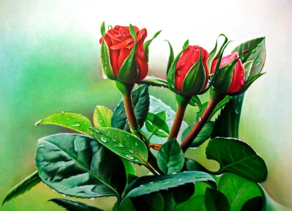 color pencil drawing red rose by musa celik
