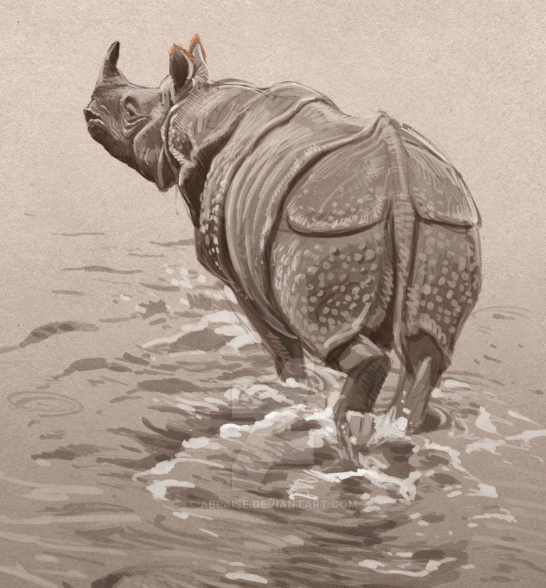 rhino pencil drawings by aaron blaise