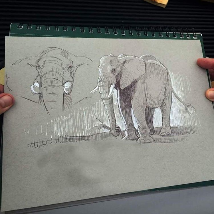 elephant naimal pencil drawings by aaron blaise