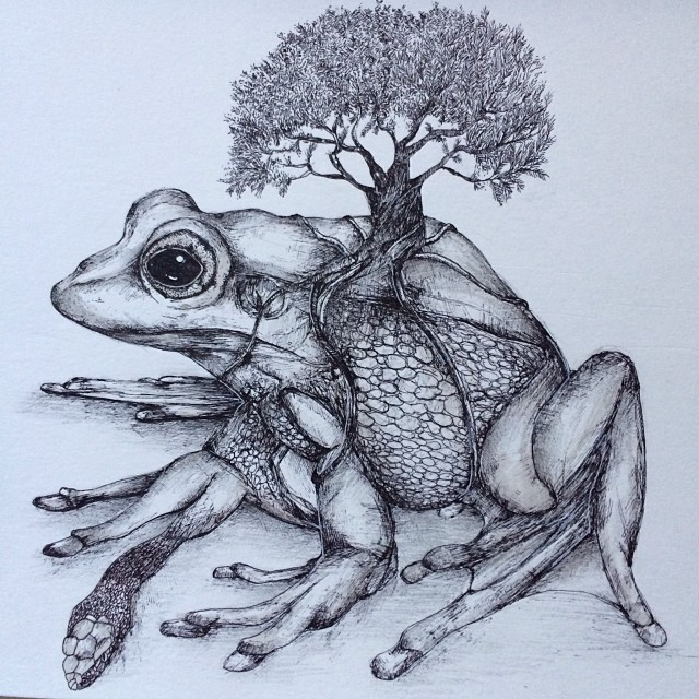 surreal drawing art frog alfred basha
