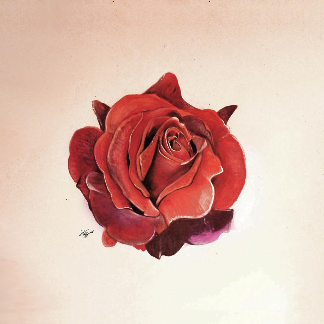 rose color pencil drawings by kayan artcisne