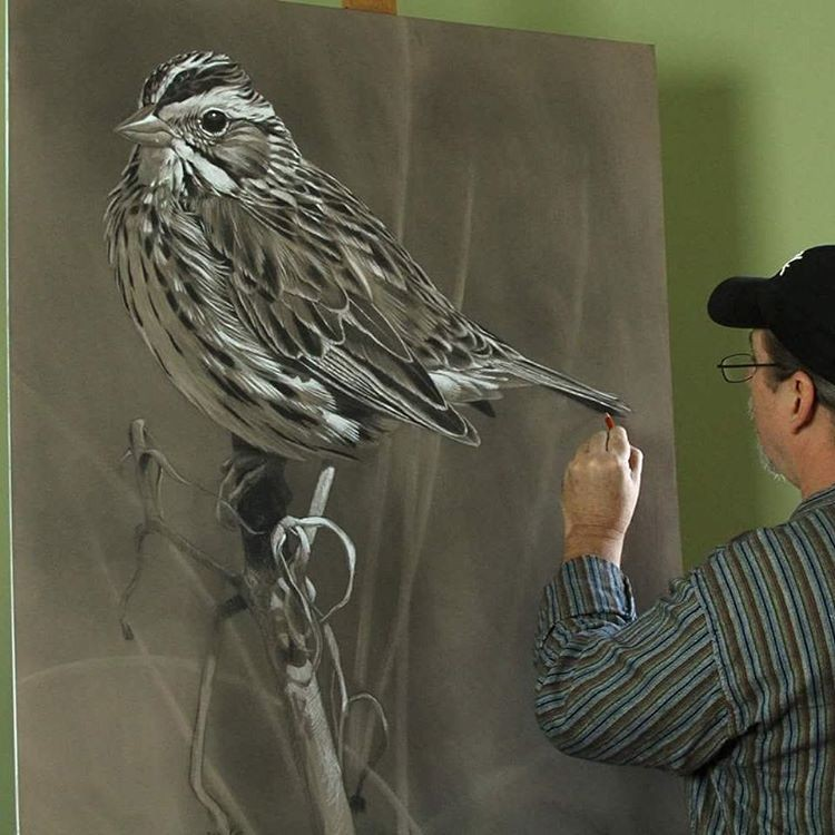 bird pencil drawings by aaron blaise
