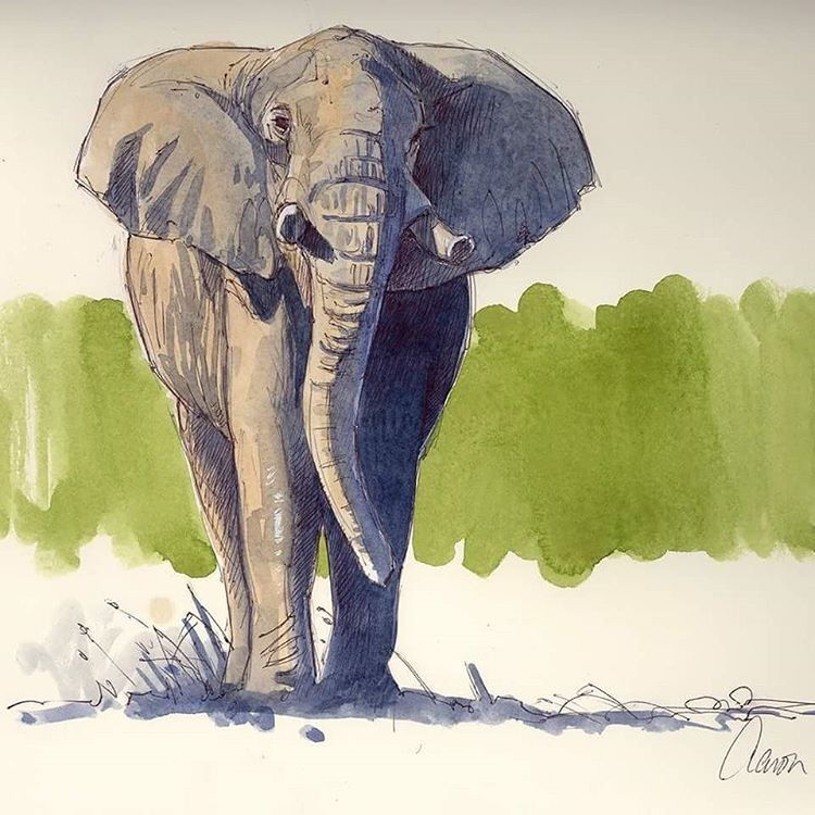 elephant animal paintings by aaron blaise