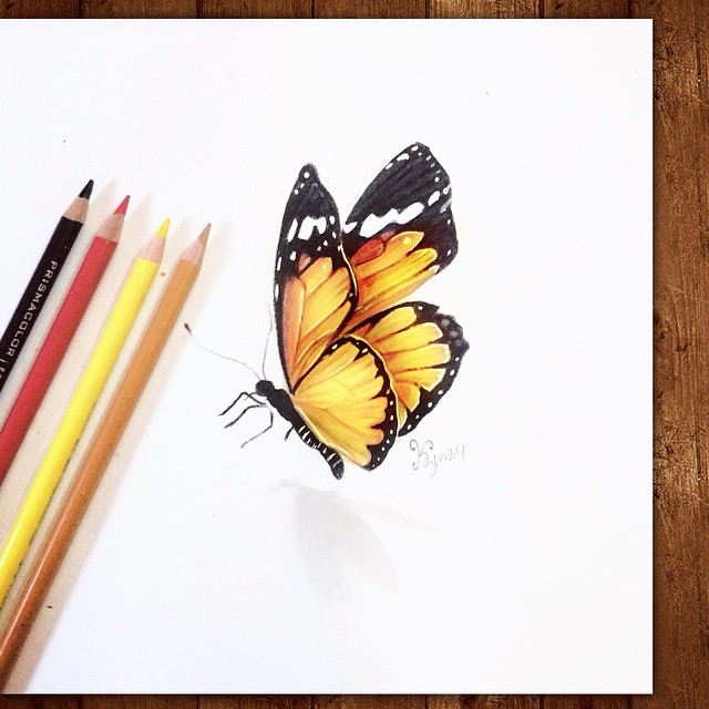 butterfly color pencil drawings by kayan artcisne