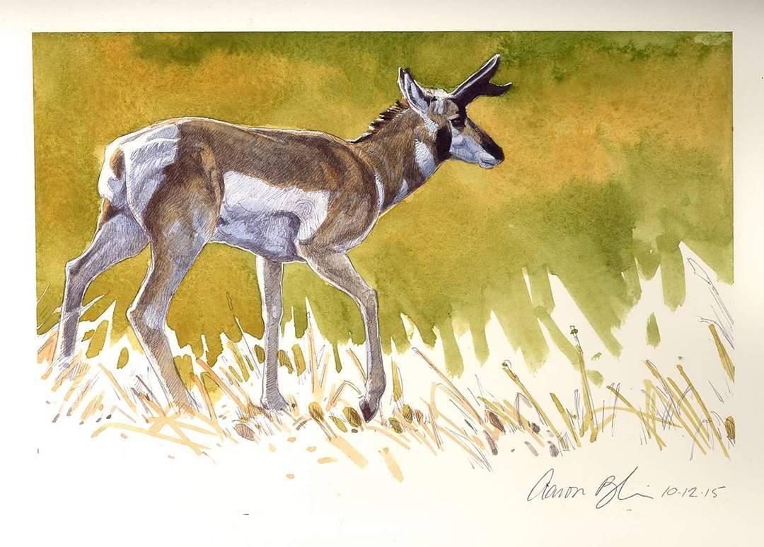 deer animal paintings by aaron blaise