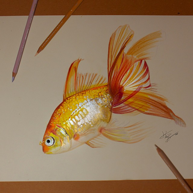 fish color pencil drawings by kayan artcisne