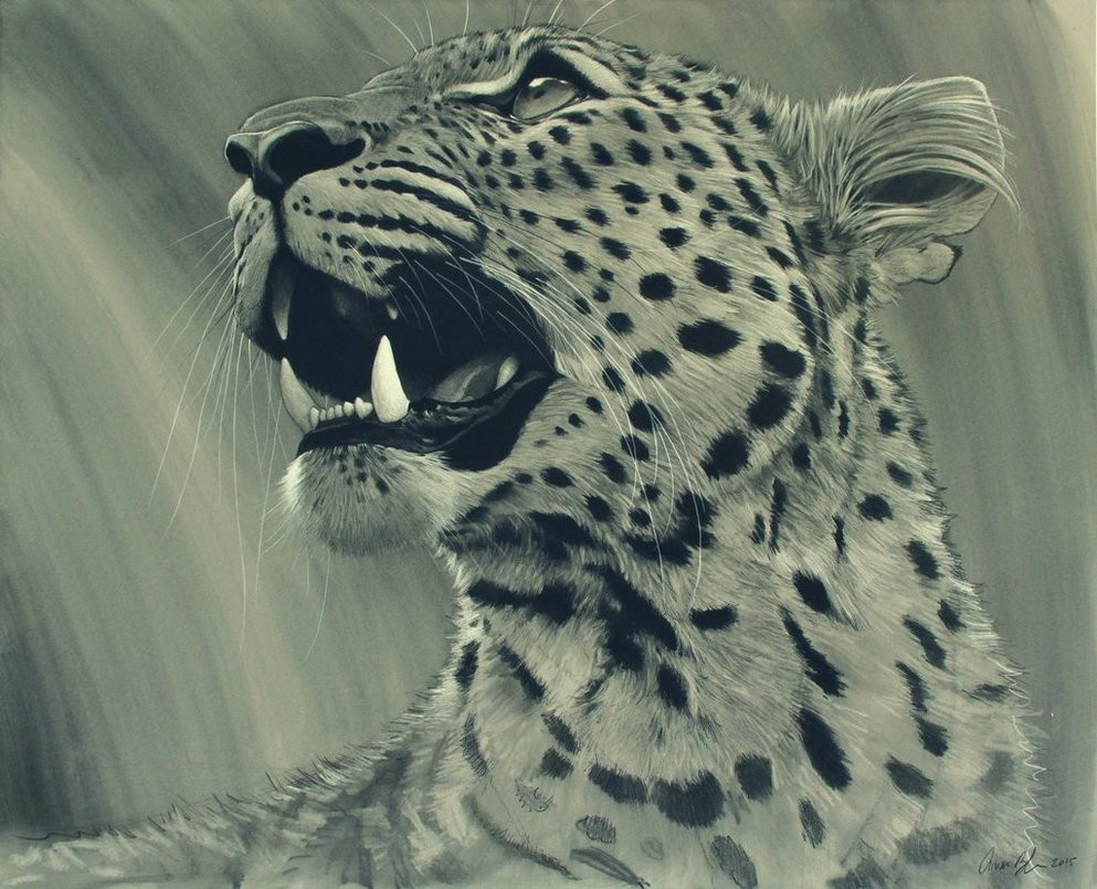 leopard animal pencil drawings by aaron blaise