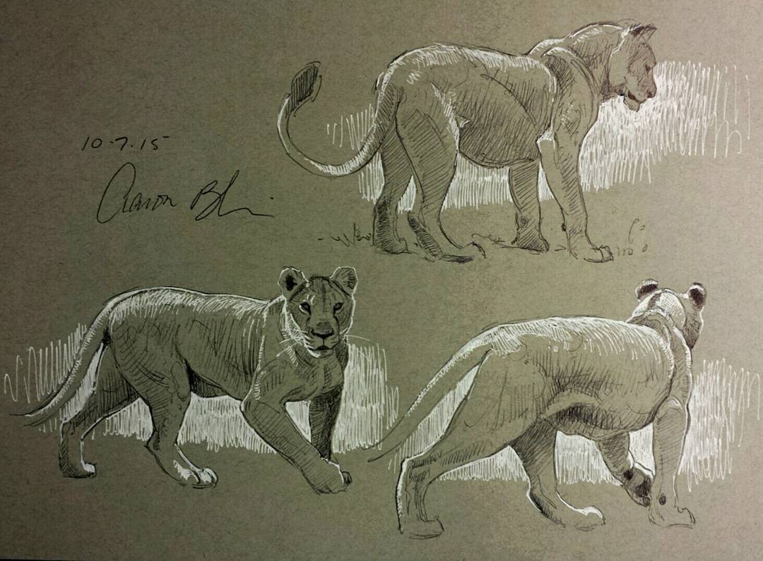 lion animal pencil drawings by aaron blaise