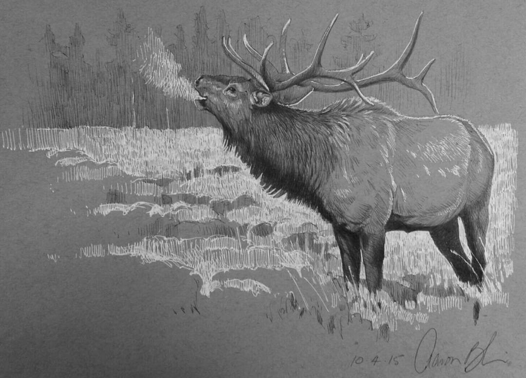 deer pencil drawings by aaron blaise