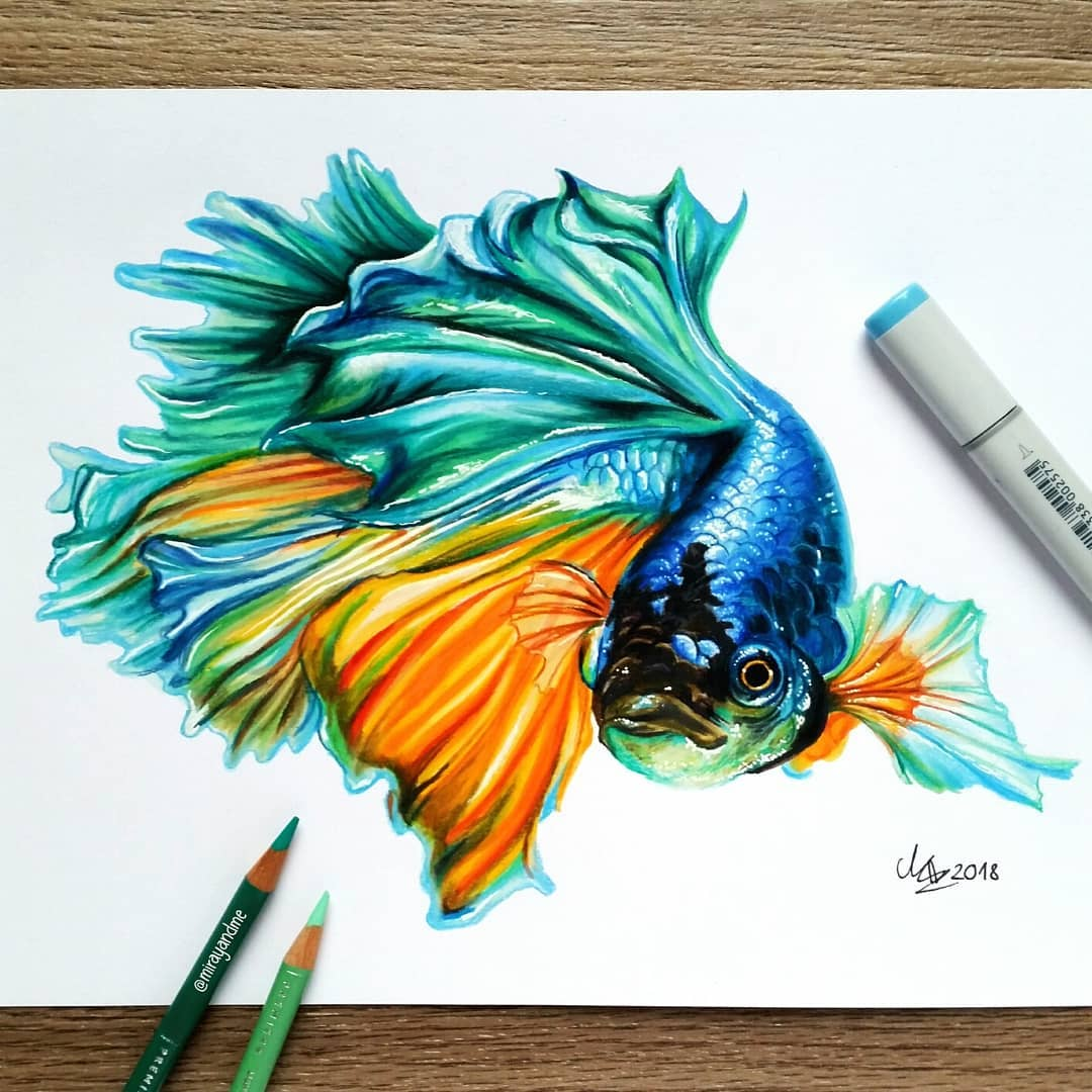 color pencil drawing fish miray