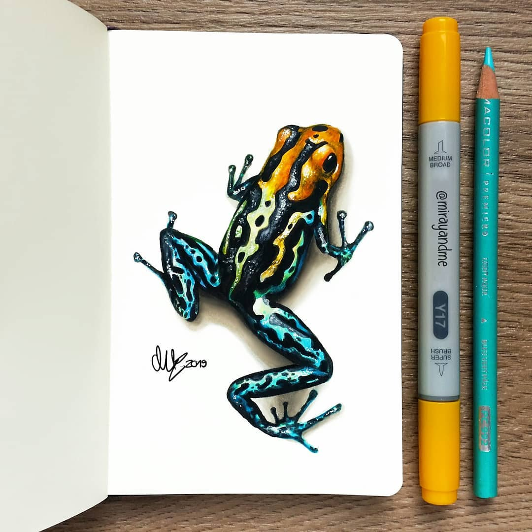 color pencil drawing frog miray