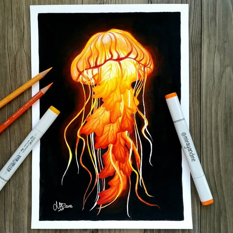 color pencil drawing jellyfish miray