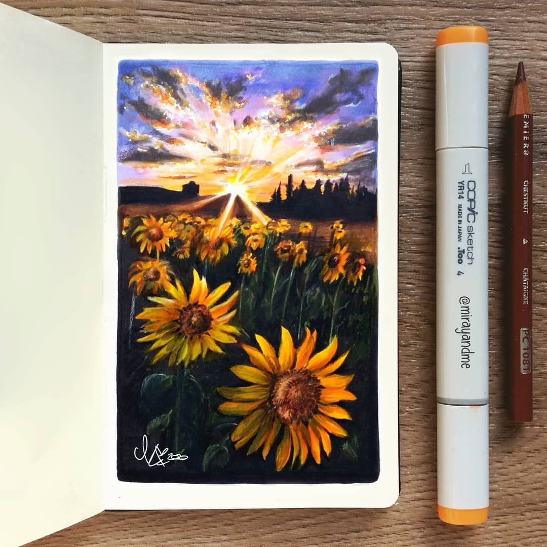 color pencil drawing sunflower miray