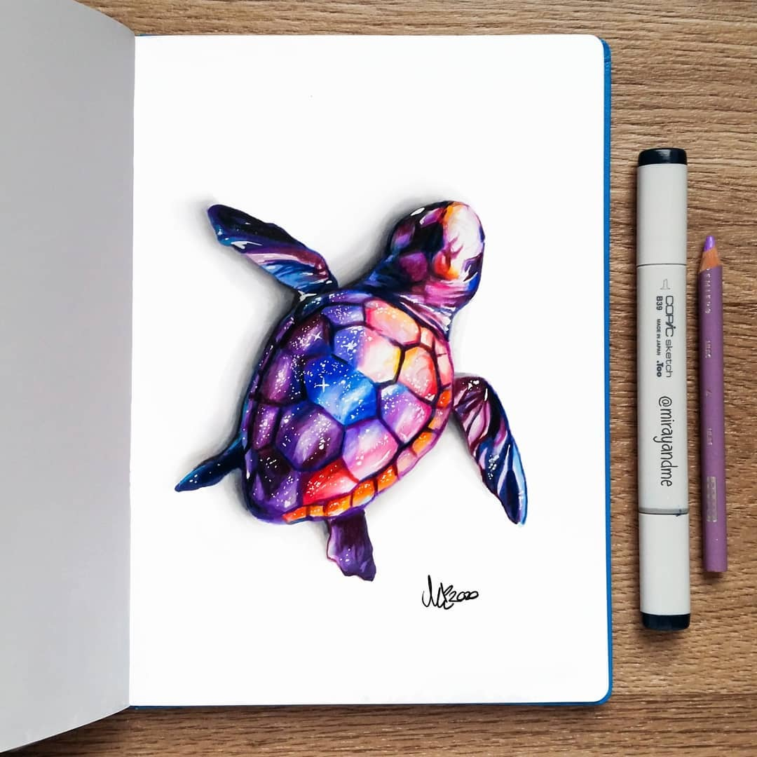color pencil drawing turtle miray