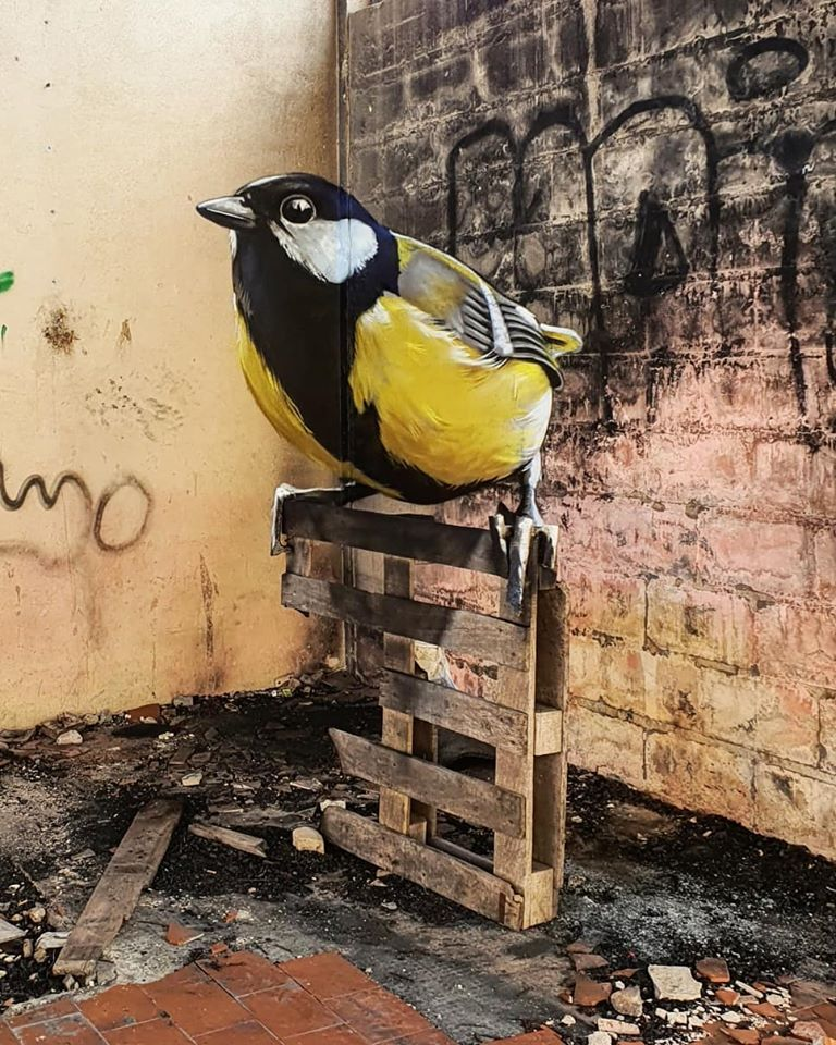 3d wall art mural painting bird odeith